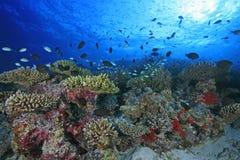 Récif coralien Photo stock