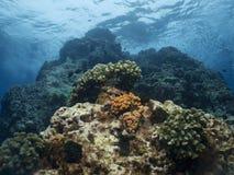 Récif coralien photos stock