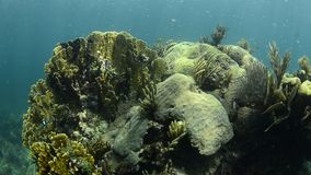 Récif coralien Image libre de droits