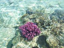 Récif coralien 4 image libre de droits