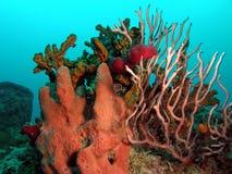 récif coralien Photos libres de droits