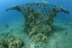 Récif coralien artificiel Photos libres de droits