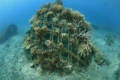 Récif coralien artificiel Image libre de droits