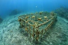 Récif coralien artificiel Images stock