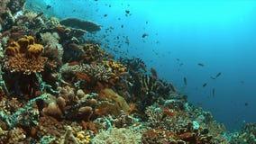 Récif coralien avec des poissons d'abondance Photo stock