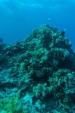 Récif coralien avec le corail du feu et poissons exotiques au fond de la mer tropicale colorée sous-marine Photographie stock libre de droits