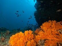 Récif coralien avec le détail des coraux mous Image libre de droits