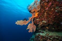 Récif coralien avec le détail des coraux mous Photo stock