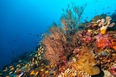 Récif coralien avec le détail des coraux mous Photos stock