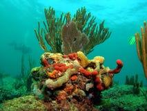Récif coralien avec le plongeur Images stock