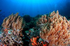 Récif coralien avec le Sunray Photos stock