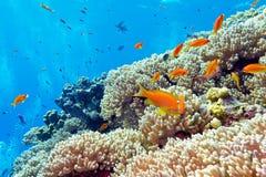 Récif coralien avec les coraux durs et les poissons exotiques en mer tropicale Photographie stock libre de droits