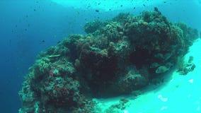 Récif coralien avec les poissons 4k d'abondance clips vidéos