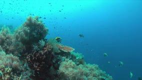 Récif coralien avec les poissons 4k d'abondance banque de vidéos