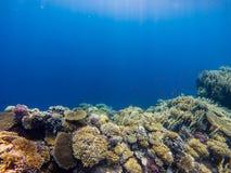 Récif coralien avec s'embrancher swimm tropical de corail et coloré de poissons image libre de droits