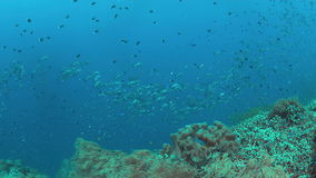 Récif coralien avec une école de la cordelette noire 4k banque de vidéos