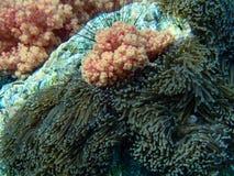 Récif coralien coloré Images libres de droits