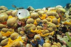 Récif coralien coloré sous l'eau de la mer des Caraïbes Photographie stock libre de droits