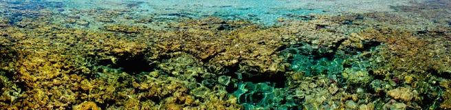 Récif coralien d'alam de Marsa Photos stock