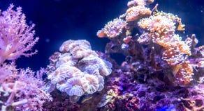 Récif coralien dans l'aquarium Photos libres de droits
