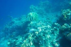 récif coralien de la mer Image libre de droits