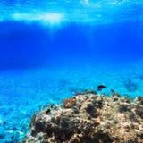 Récif coralien de la Mer Rouge Image stock