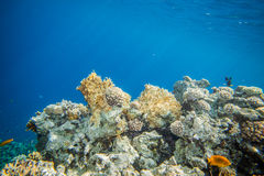 Récif coralien de la Mer Rouge Images libres de droits