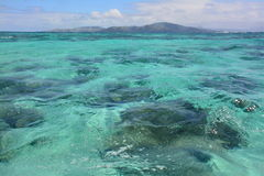 Récif coralien de mer Images stock