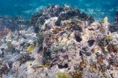 Récif coralien de mort Photo stock