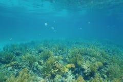 Récif coralien de paysage sous-marin et surface de mer photo libre de droits