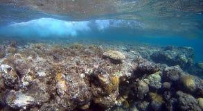 Récif coralien de semicolor de tache floue en Mer Rouge Image stock