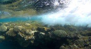 Récif coralien de semicolor de tache floue en Mer Rouge Photos stock