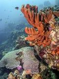 récif coralien des Caraïbes Photographie stock