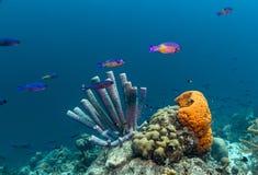 récif coralien des Caraïbes Photo libre de droits
