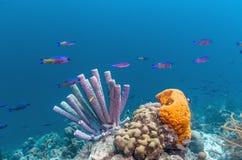 récif coralien des Caraïbes Photos stock