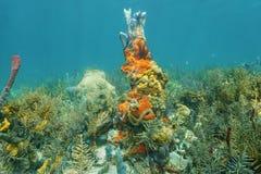 Récif coralien des Caraïbes avec l'espèce marine colorée Photographie stock