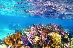 Récif coralien des Caraïbes la Riviera maya colorée Image libre de droits