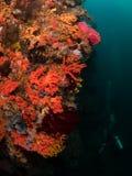 Récif coralien du sud typique en parc national de Komodo Images libres de droits