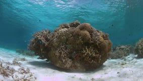 Récif coralien en eau peu profonde clips vidéos