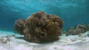 Récif coralien en eau peu profonde banque de vidéos
