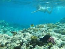 Récif coralien en Egypte 4 Image libre de droits