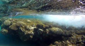 Récif coralien en Mer Rouge Image libre de droits