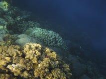 Récif coralien en Mer Rouge. Photo stock