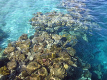 Récif coralien en Mer Rouge Photographie stock