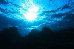 Récif coralien en Mer Rouge Images libres de droits