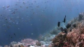Récif coralien en Raja Ampat, Indonésie 4k banque de vidéos