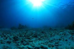 Récif coralien endommagé Photographie stock libre de droits
