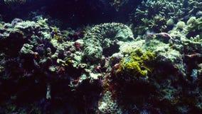 Récif coralien et concombre de mer banque de vidéos