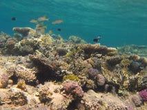 Récif coralien et eau bleue d'espace libre Photographie stock
