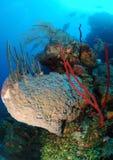 Récif coralien et plongeurs image stock